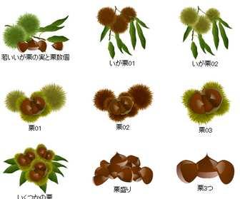 秋素材・栗のイラスト