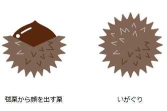 栗のイラスト(1) - フリーイラスト・無料素材のイラスター