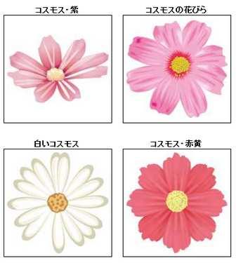 コスモスのイラスト・画像/無料のフリー素材集【百花繚乱】