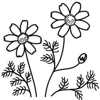 コスモス・キキョウ(桔梗)1/秋の花/無料イラスト【白黒イラスト素材】