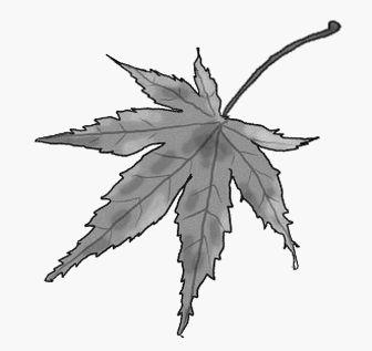 白黒 紅葉(もみじ) 秋のイラスト素材 無料テンプレート