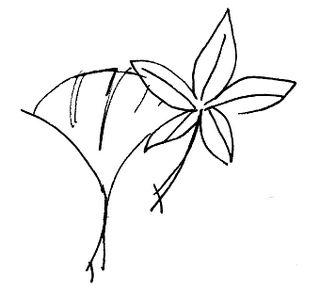 イチョウとモミジ イラスト無料素材(モノクロ) : 秋・紅葉 イラスト 無料素材