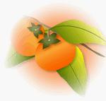 柿 フリー素材のイラスト・画像集めてみた!アイキャッチ