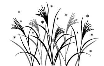 ガーデン&グリーン / ススキ 無料イラスト素材