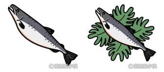 素材屋小秋: 鮭の無料イラスト・フリー素材
