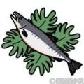 鮭 フリー素材のイラスト・画像集めてみた!