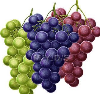 葡萄(ブドウ)のイラスト・条件付フリー素材集