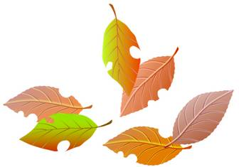 【秋/季節もの】 落ち葉
