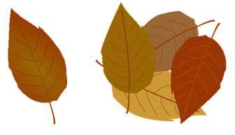 落ち葉のイラスト素材
