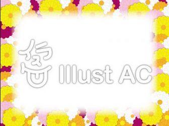 菊イラスト/無料イラストなら「イラストAC