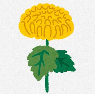 菊のイラスト「黄色い菊」: 無料イラスト かわいいフリー素材集