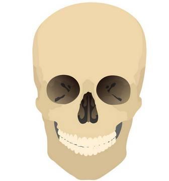 [フリーイラスト素材] クリップアート, 骸骨 / 髑髏, 頭蓋骨, 人体 / 体の部位, 死, EPS ID:201406220200 - GATAG|フリーイラスト素材集