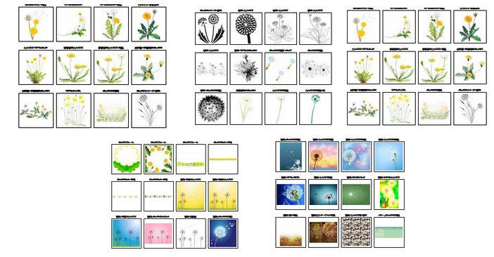 たんぽぽの花のイラスト・画像・素材