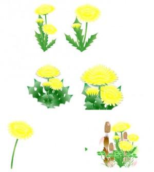 花通信 たんぽぽイラスト