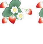 苺の背景壁紙イラスト