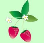 苺の花と実のイラスト