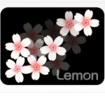 背景が黒 桜の花イラスト