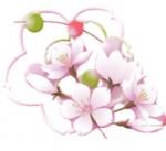 桜の花と三色団子をイメージした玉飾りのイラスト