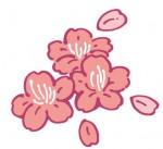 桜6の無料イラスト