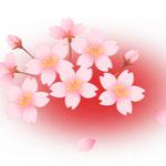 桜 背景赤
