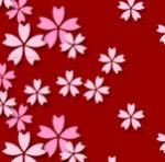 背景が赤の桜の花の壁紙