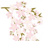 サクラの花・枝
