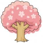 桜の木-満開