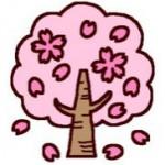 クラ2(カラー)/春/桜