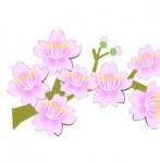 桜の枝イラスト