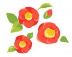 三輪の椿の花