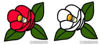 赤と白の2輪の椿