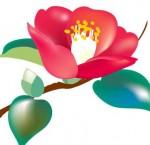 きれいなツバキの花