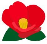 鮮やかな赤の椿の花