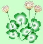 四葉のクローバーと花の無料イラスト素材