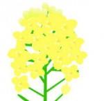 菜の花のイラスト素材 PNG、GIF画像は背景は透明