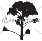 菜の花のシルエット