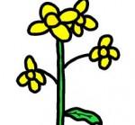 一輪の菜の花 イラスト