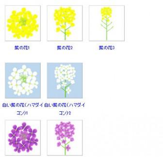 白や紫色の菜の花イラスト