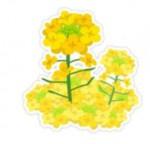 春の植物のイメージを千葉県のシンボル なのはなイラスト