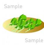 菜の花の無料イラスト素材 PNGは無料