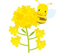 春の素材 ハチと菜の花