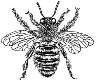 ミツバチ女王クリップアート ベクター クリップ アート - 無料ベクター | 無料素材イラスト・ベクターのフリーデザイナー
