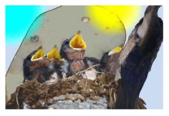 燕のヒナ: 描きたてのイラスト