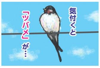 つばめイラスト.jpg - 水にこだわるブログ
