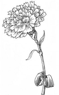 File:Carnation (PSF) grayscale.png - Wikimedia Commons