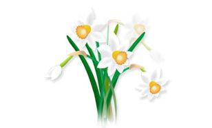 春のイラスト【水仙】
