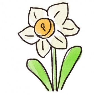 水仙のイラスト(花): ゆるかわいい無料イラスト素材集
