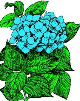 Arthur's Free Flower Clip art Page