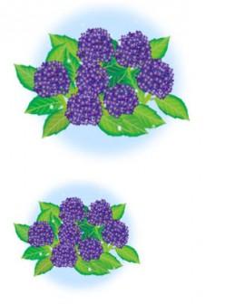 紫陽花のイラスト素材2