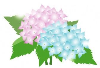 紫陽花(あじさい)│無料クリップアート Drawing